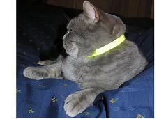 Cat Reflector Collar